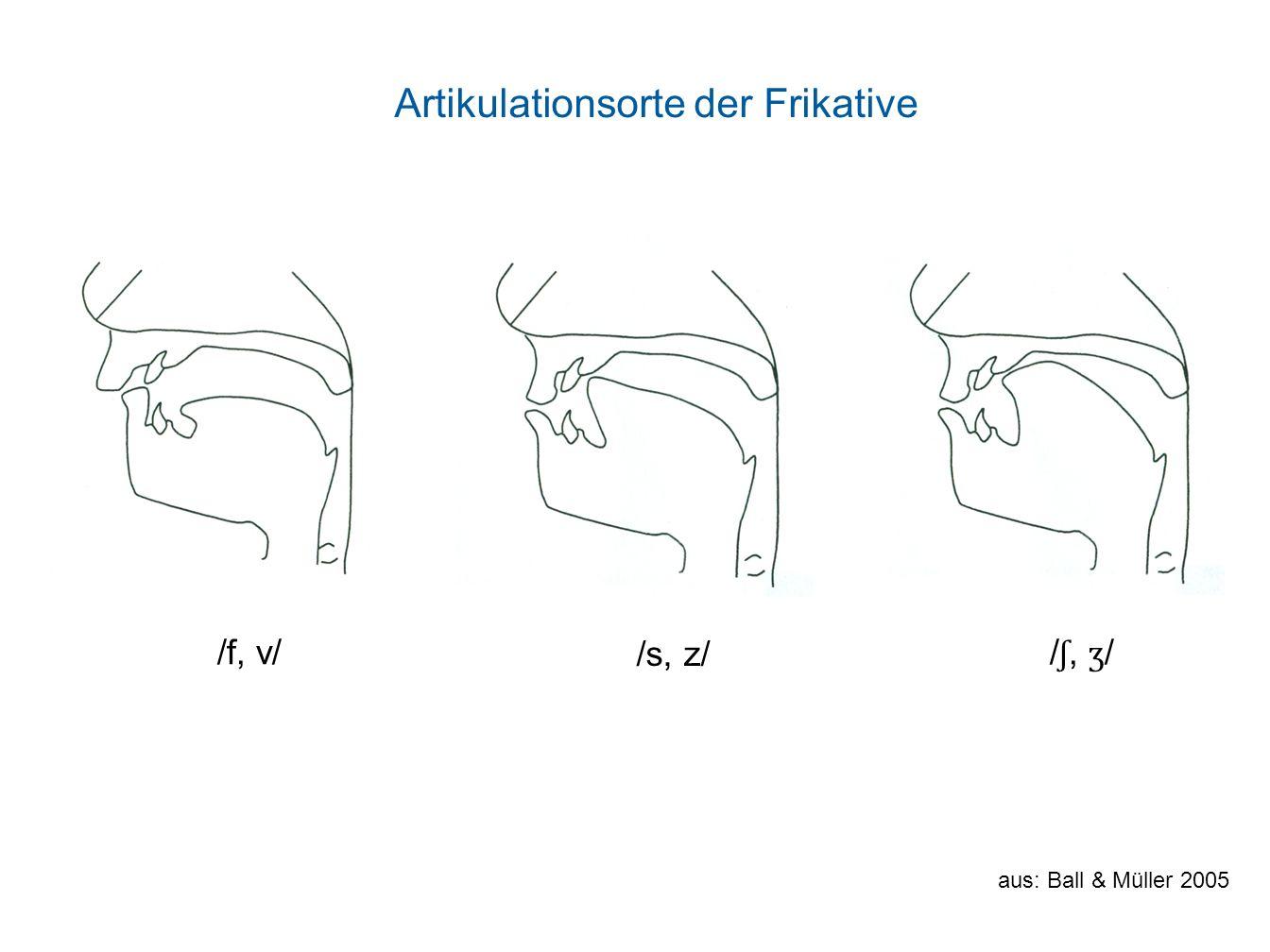 Artikulationsorte der Frikative /f, v/ /s, z/ / ʃ, ʒ / aus: Ball & Müller 2005