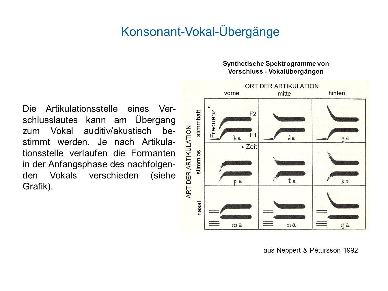 Synthetische Spektrogramme von Verschluss - Vokalübergängen Die Artikulationsstelle eines Ver- schlusslautes kann am Übergang zum Vokal auditiv/akusti