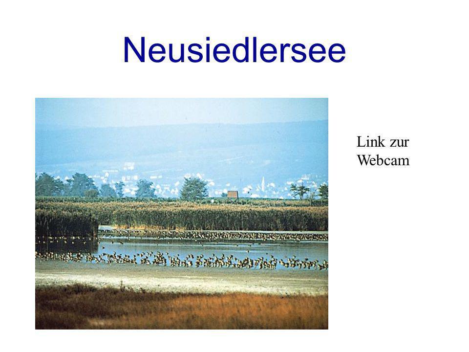 Neusiedlersee Link zur Webcam