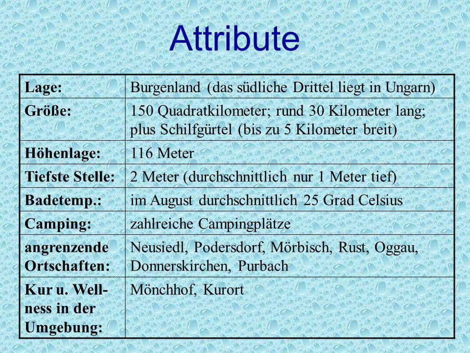 Attribute Lage:Burgenland (das südliche Drittel liegt in Ungarn) Größe:150 Quadratkilometer; rund 30 Kilometer lang; plus Schilfgürtel (bis zu 5 Kilom
