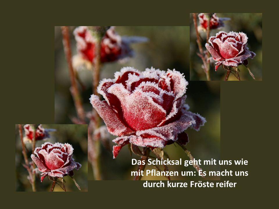 Das Leben ist eine Bergwiese, voll von schönen Blumen. Man muss sie nur sehen