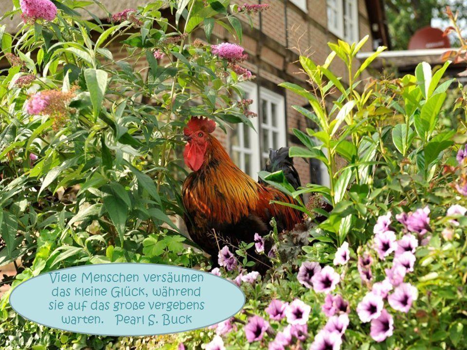 Die besten Gärtner sind die mit einer blühenden Fantasie. Judy Parker