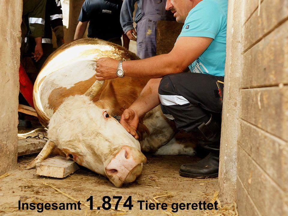 Insgesamt 1.874 Tiere gerettet