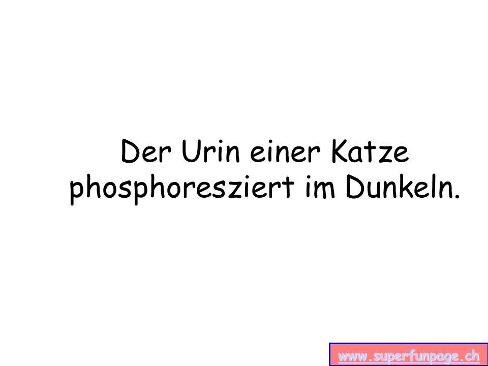 www.superfunpage.ch Der Urin einer Katze phosphoresziert im Dunkeln.