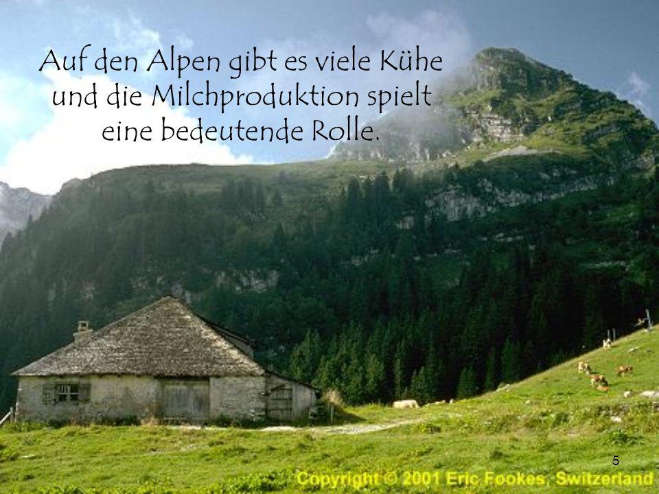 5 Auf den Alpen gibt es viele Kühe und die Milchproduktion spielt eine bedeutende Rolle.