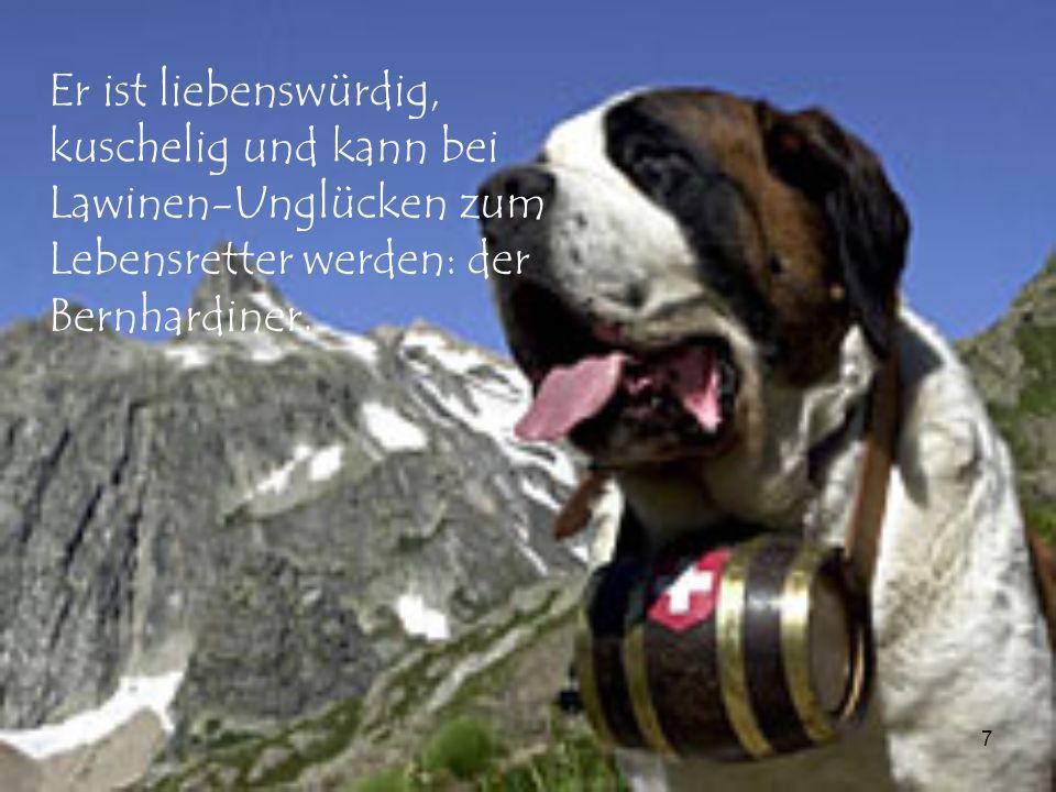 7 Er ist liebenswürdig, kuschelig und kann bei Lawinen-Unglücken zum Lebensretter werden: der Bernhardiner.
