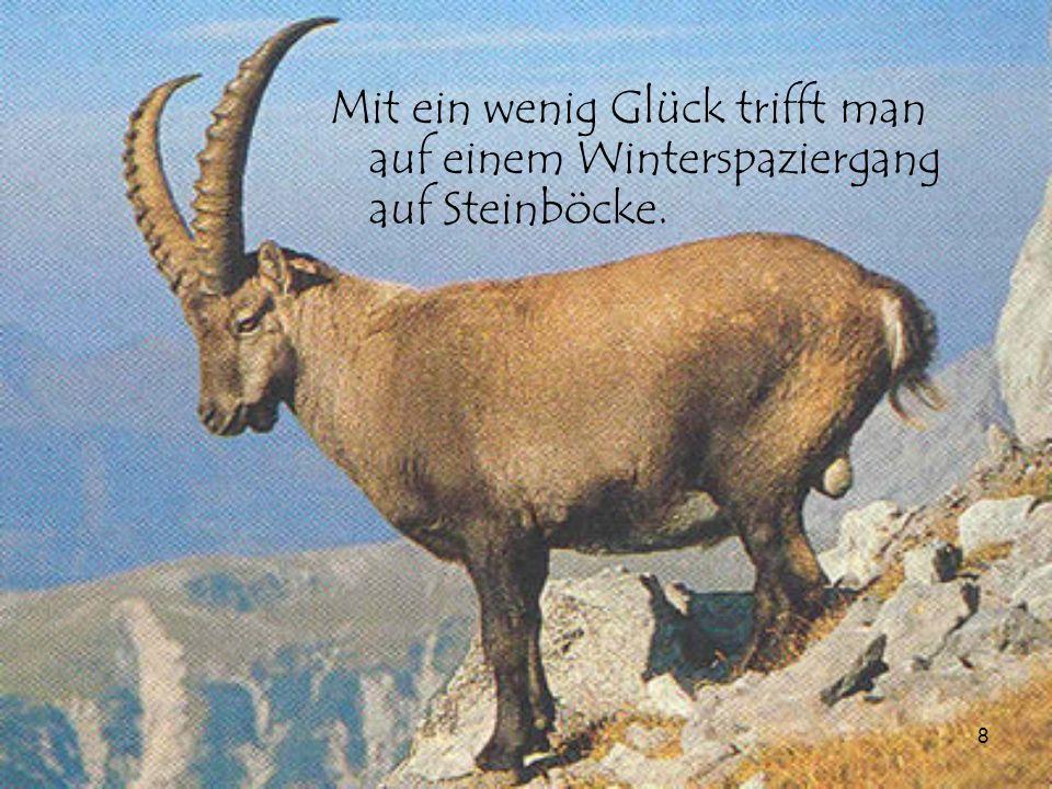 9 Seit dem Jahr 1815 ist die Schweiz ein neutrales Land.