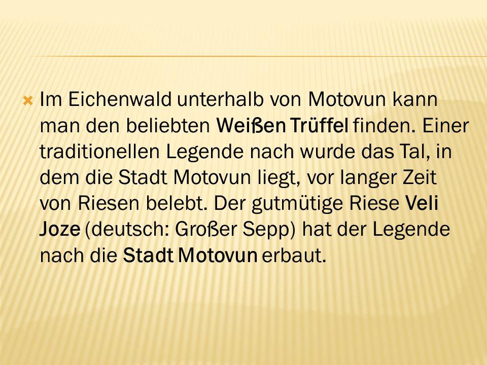 Im Eichenwald unterhalb von Motovun kann man den beliebten Weißen Trüffel finden. Einer traditionellen Legende nach wurde das Tal, in dem die Stadt Mo
