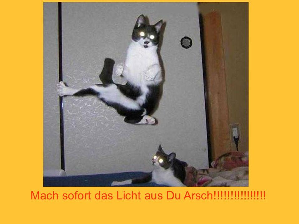 Mach sofort das Licht aus Du Arsch!!!!!!!!!!!!!!!!