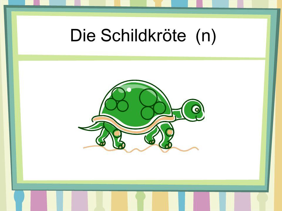 Die Schildkröte (n)