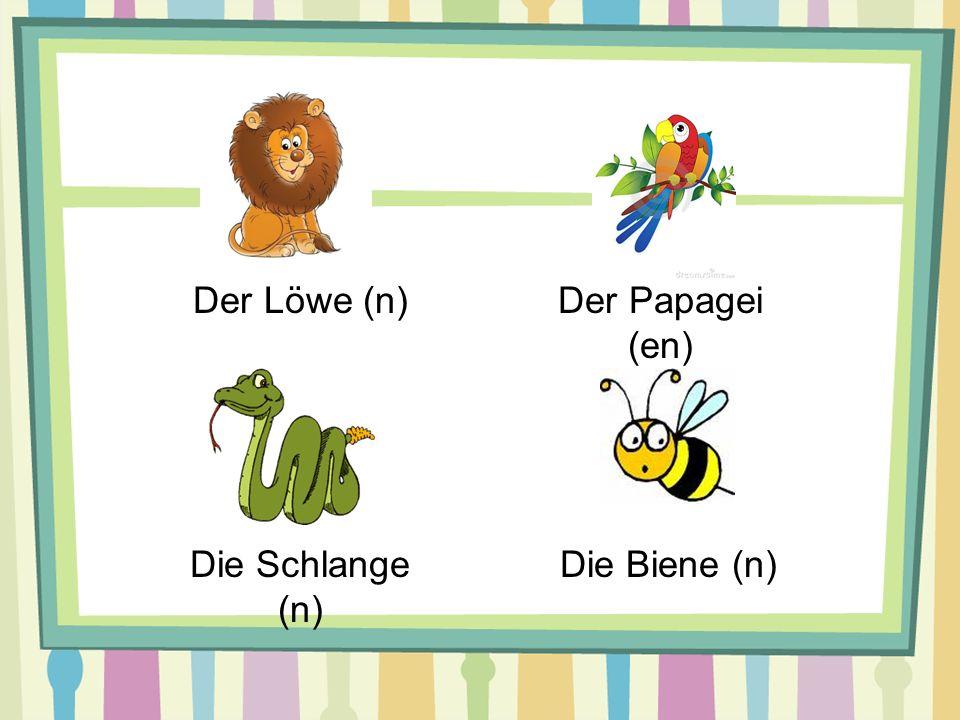 Der Löwe (n)Der Papagei (en) Die Schlange (n) Die Biene (n)