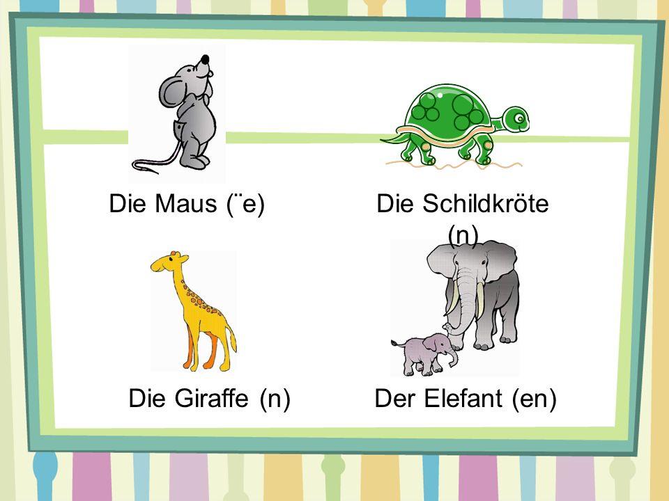 Die Maus (¨e)Die Schildkröte (n) Die Giraffe (n)Der Elefant (en)