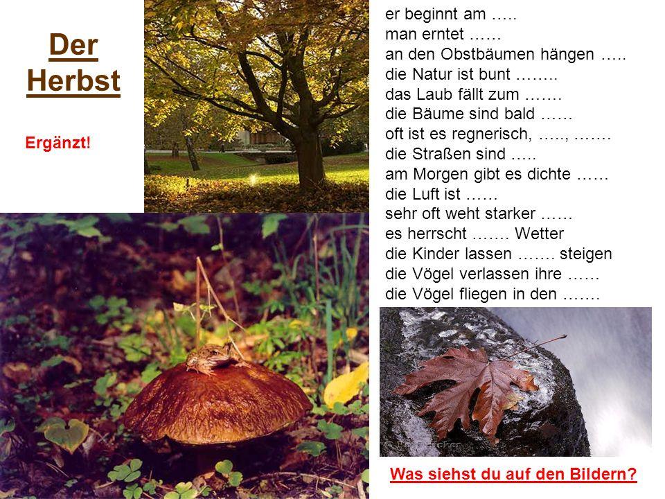 Der Herbst Was siehst du auf den Bildern? er beginnt am ….. man erntet …… an den Obstbäumen hängen ….. die Natur ist bunt …….. das Laub fällt zum …….