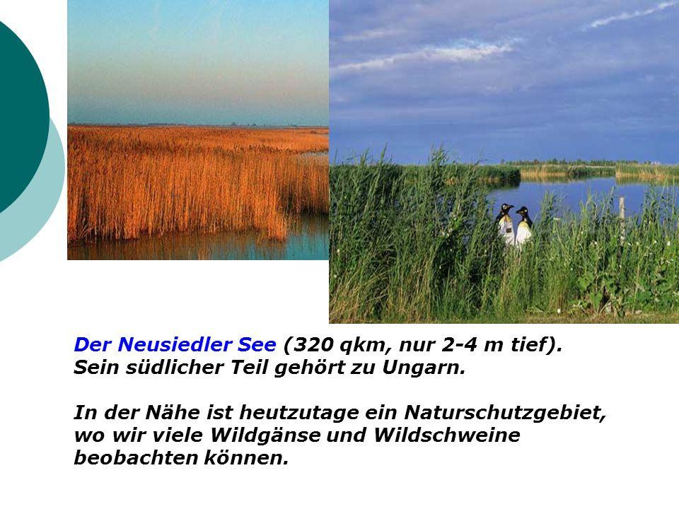 Der Neusiedler See (320 qkm, nur 2-4 m tief). Sein südlicher Teil gehört zu Ungarn. In der Nähe ist heutzutage ein Naturschutzgebiet, wo wir viele Wil