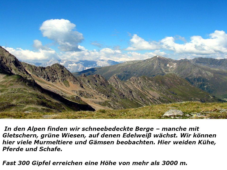 In den Alpen finden wir schneebedeckte Berge – manche mit Gletschern, grüne Wiesen, auf denen Edelweiβ wächst. Wir können hier viele Murmeltiere und G