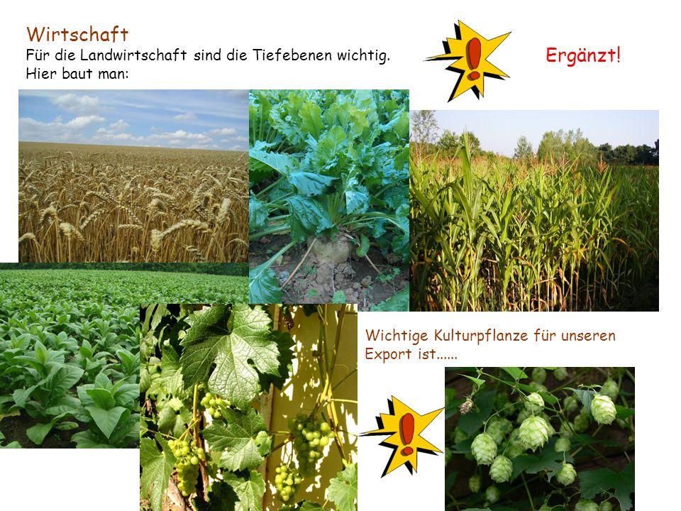 Wirtschaft Für die Landwirtschaft sind die Tiefebenen wichtig. Hier baut man: Wichtige Kulturpflanze für unseren Export ist...... Ergänzt!
