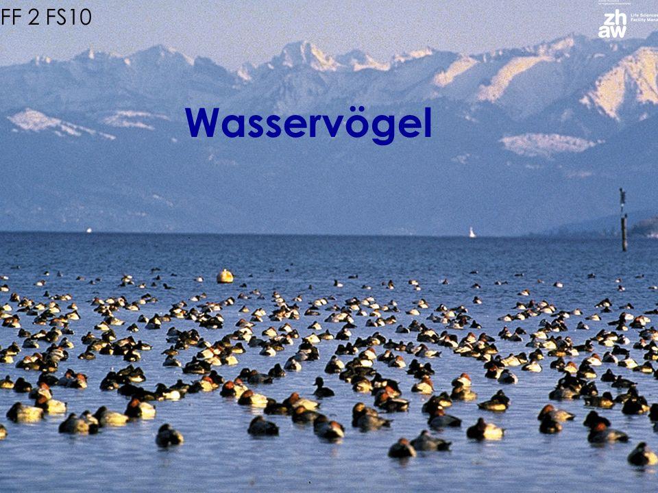 Wasservogelgebiete der Schweiz aus Grundkurs Ornithologie, ZVS