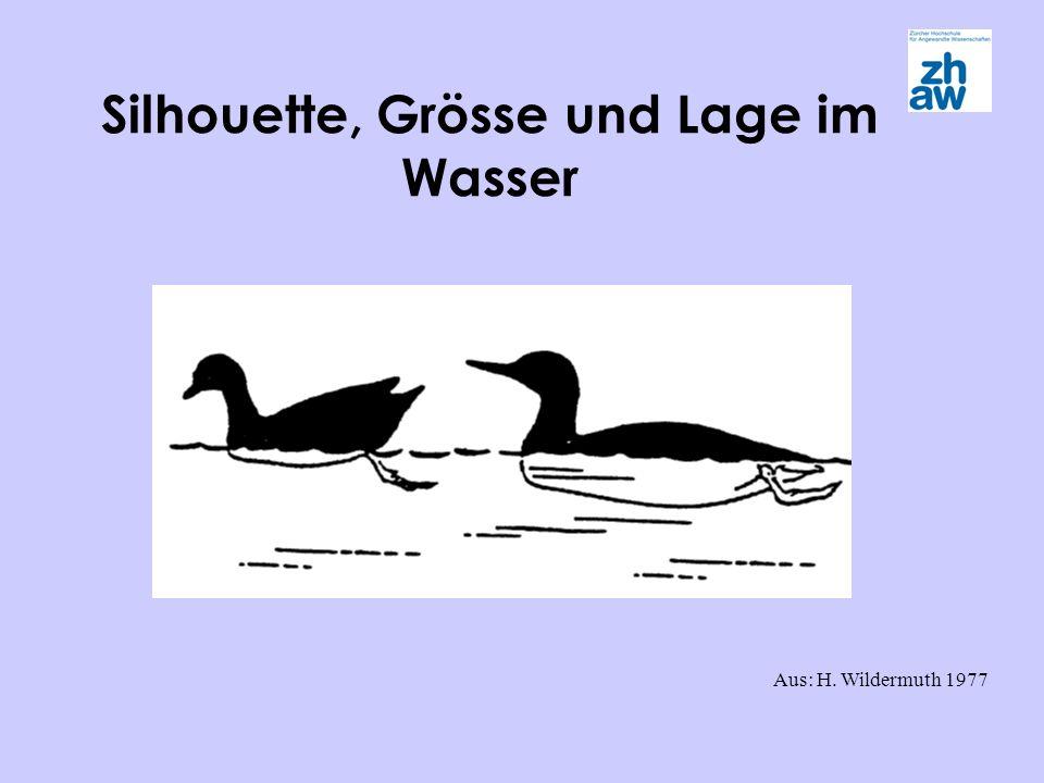 Silhouette, Grösse und Lage im Wasser Aus: H. Wildermuth 1977