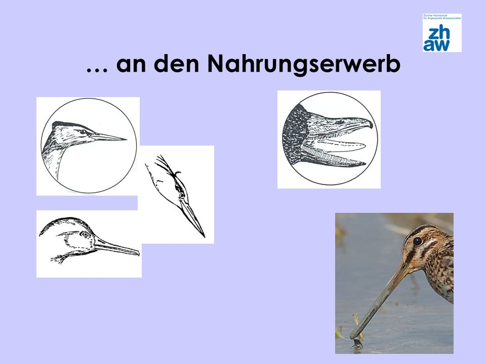 Svensson, L..et.al. 1999. Der neue Kosmos Vogelführer.
