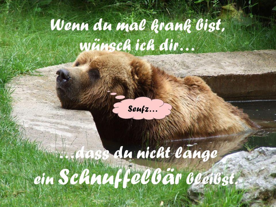 Lass die Sonne in dein Herz! Ich wünsche dir viele Bärenfreuden, Bärenfreuden, die gute Laune machen und alle die gute Laune machen und alle Sorgenges