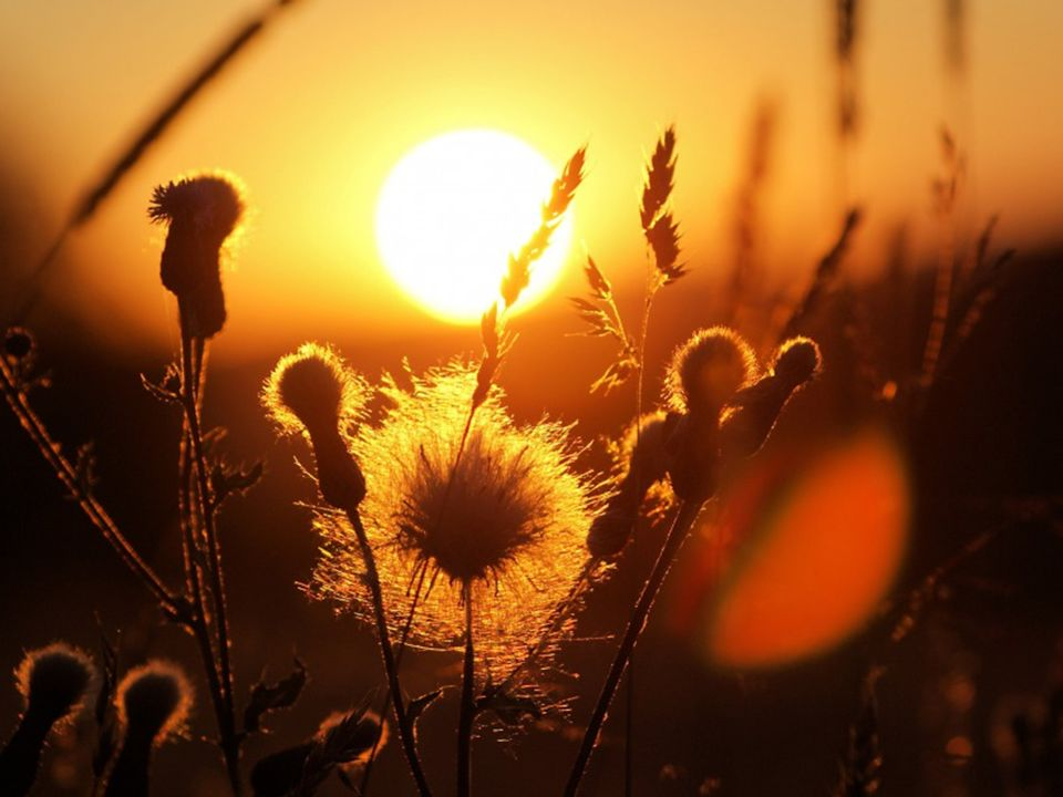 Mein Fenster steht offen, damit der Morgenwind dich hereinträgt.