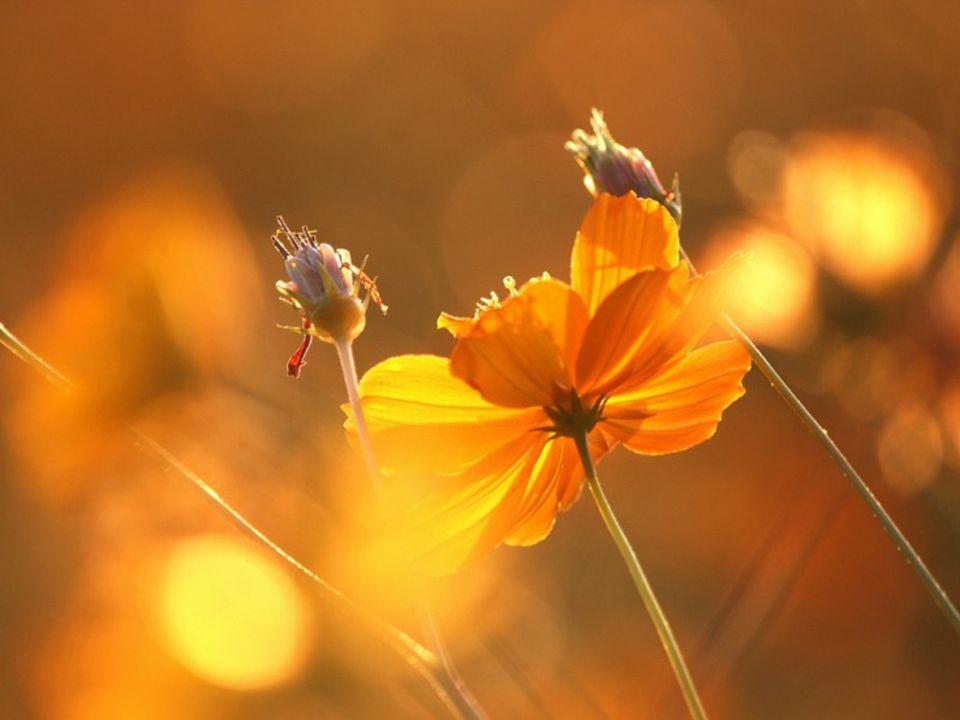 Morgensonne schicke ich dir, damit sie mit Freudenstrahlen in dein Herz fällt.