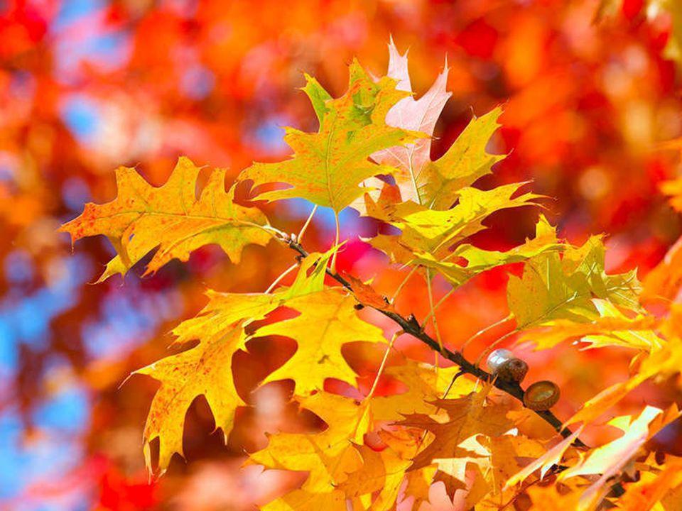 Herbst- Herbst- Wendepunkt. Wendepunkt.