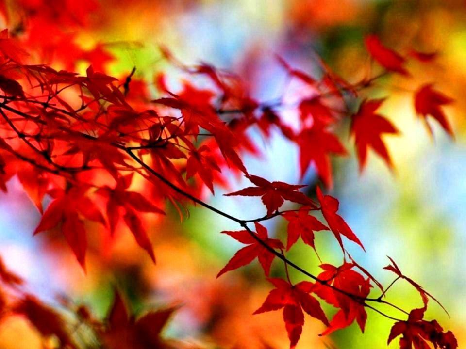 Während die Wärme des Sommers zur Erinnerung wird und der Herbst bereits eine erste Ahnung des Winters mit sich bringt, bleibt dieser kurze Moment.