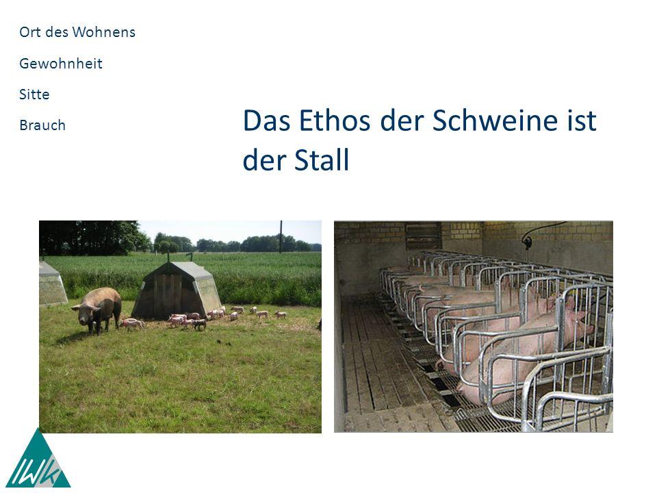 Das Ethos der Schweine ist der Stall Das Ethos der Informationsgesellschaft ist das Internet in elektronischen Räumen neue Verhaltensformen neue Normen neue Moral neue Ethik.