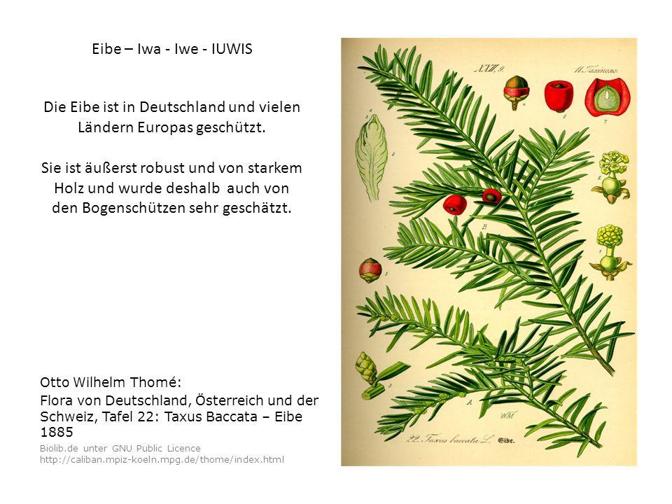 Otto Wilhelm Thomé: Flora von Deutschland, Österreich und der Schweiz, Tafel 22: Taxus Baccata – Eibe 1885 Biolib.de unter GNU Public Licence http://caliban.mpiz-koeln.mpg.de/thome/index.html Die Eibe ist in Deutschland und vielen Ländern Europas geschützt.