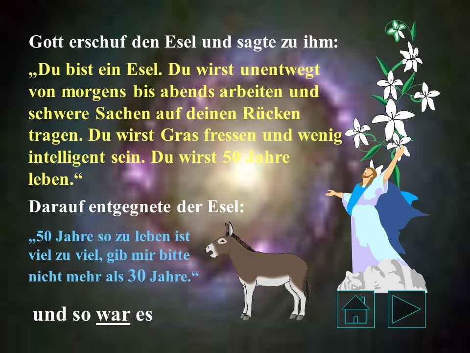 Gott erschuf den Esel und sagte zu ihm: Du bist ein Esel.