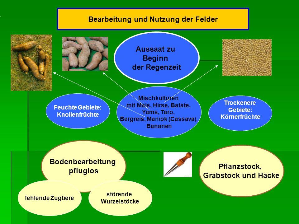 Bearbeitung und Nutzung der Felder und ist die Mischkulturen mit Mais, Hirse, Batate, Yams, Taro, Bergreis, Maniok (Cassava ), Bananen Feuchte Gebiete