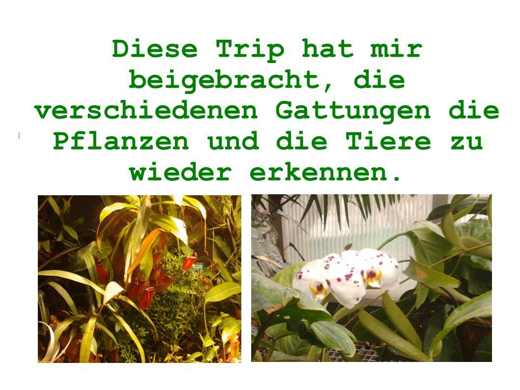 Diese Trip hat mir beigebracht, die verschiedenen Gattungen die Pflanzen und die Tiere zu wieder erkennen.
