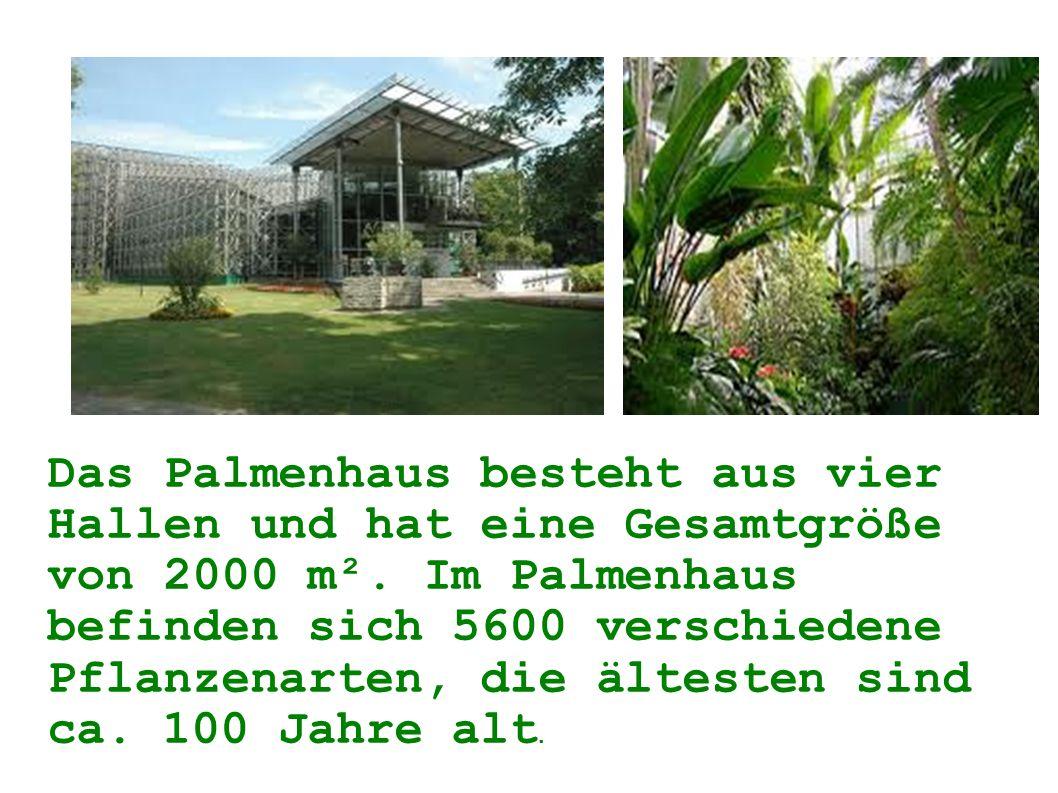 Das Palmenhaus besteht aus vier Hallen und hat eine Gesamtgröße von 2000 m². Im Palmenhaus befinden sich 5600 verschiedene Pflanzenarten, die ältesten