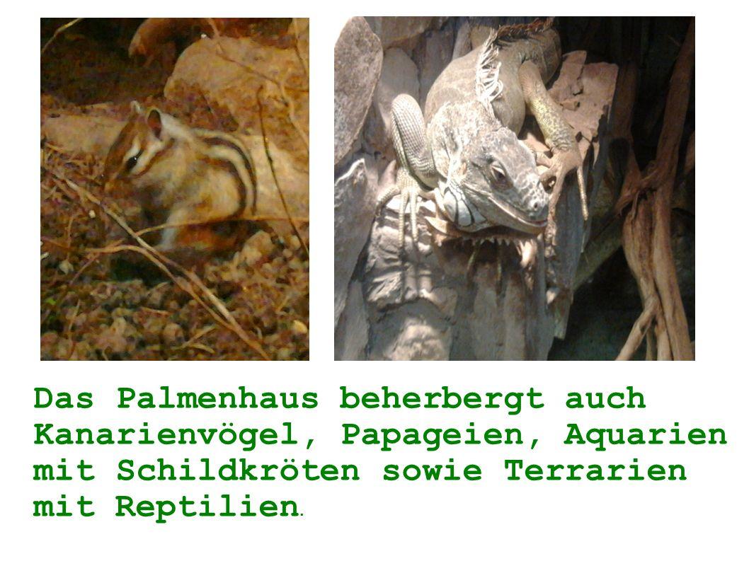 Das Palmenhaus beherbergt auch Kanarienvögel, Papageien, Aquarien mit Schildkröten sowie Terrarien mit Reptilien.