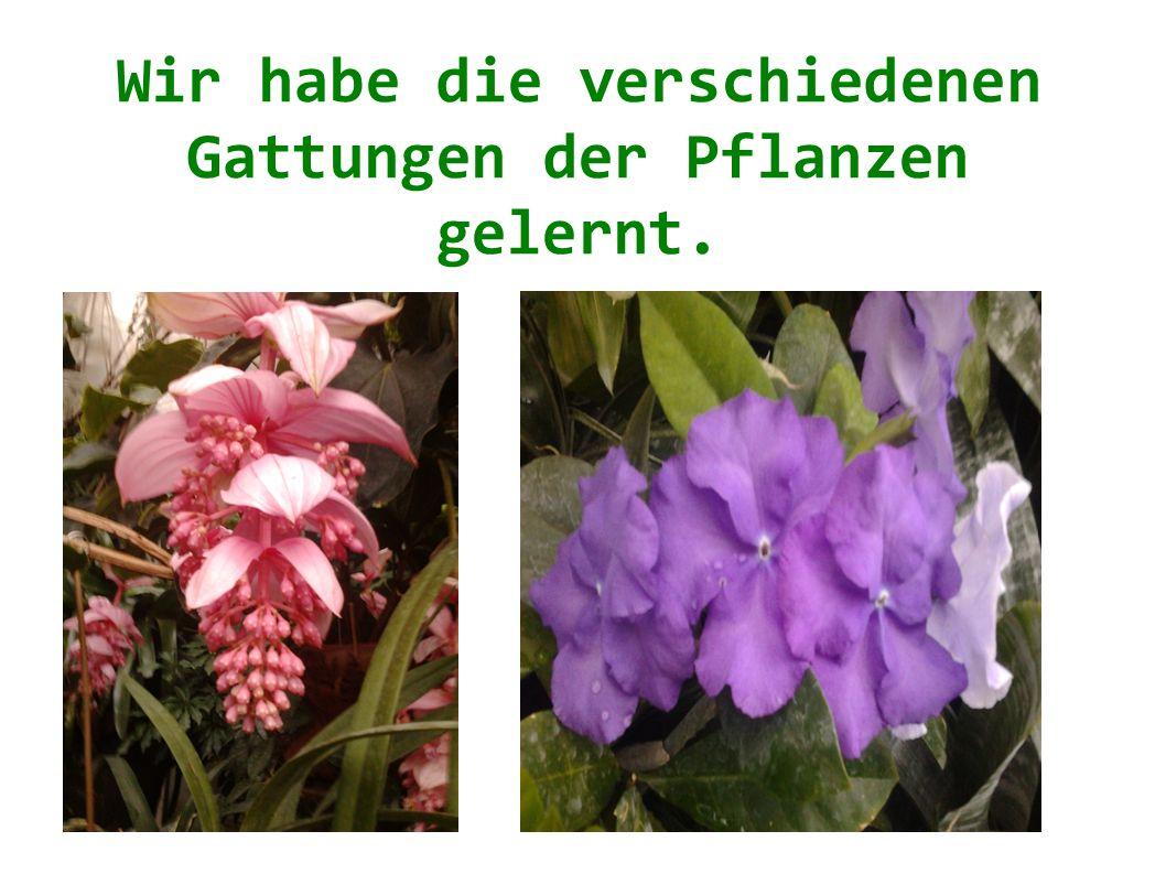 Wir habe die verschiedenen Gattungen der Pflanzen gelernt.