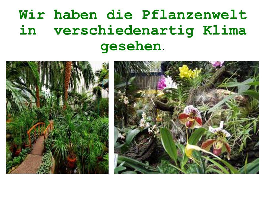 Wir haben die Pflanzenwelt in verschiedenartig Klima gesehen.