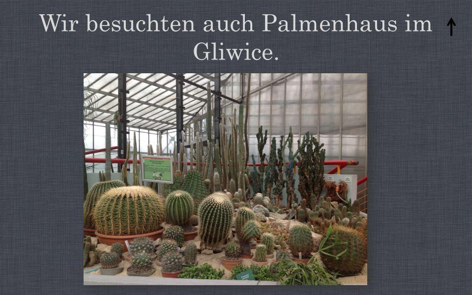 Wir besuchten auch Palmenhaus im Gliwice.