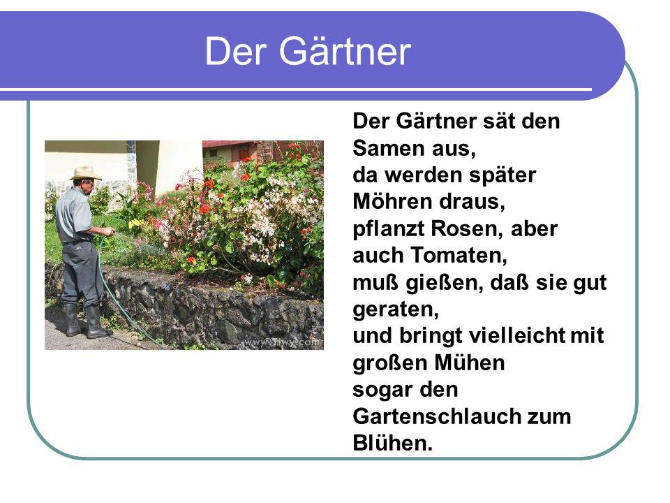 Der Gärtner Der Gärtner sät den Samen aus, da werden später Möhren draus, pflanzt Rosen, aber auch Tomaten, muß gießen, daß sie gut geraten, und bringt vielleicht mit großen Mühen sogar den Gartenschlauch zum Blühen.