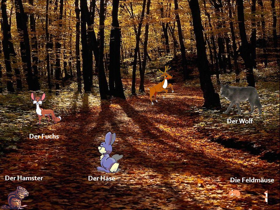 Der Wolf Der Hase Der Hamster Der Fuchs Die Feldmäuse