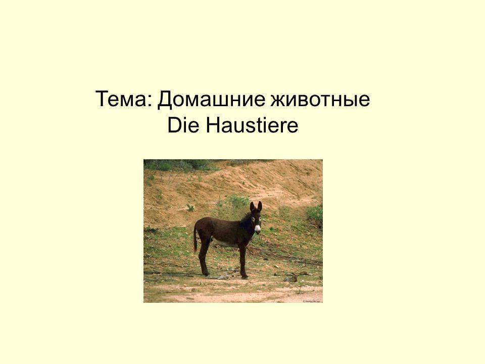 Тема: Домашние животные Die Haustiere