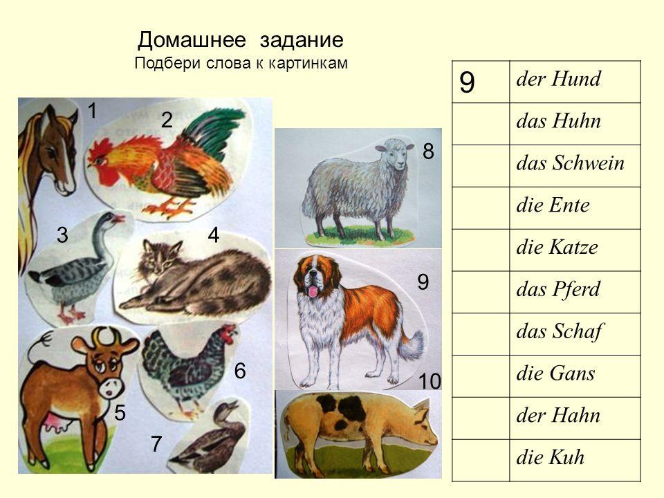 Домашнее задание Подбери слова к картинкам 9 der Hund das Huhn das Schwein die Ente die Katze das Pferd das Schaf die Gans der Hahn die Kuh 1 6 7 8 9