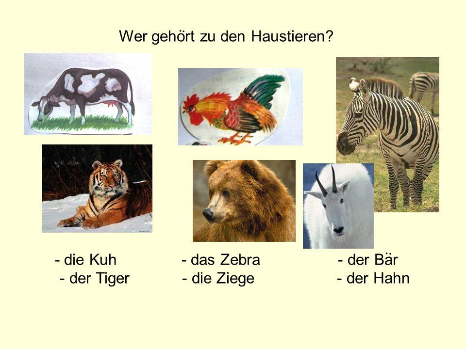 Wer gehort zu den Haustieren? - die Kuh - das Zebra - der Bar - der Tiger - die Ziege - der Hahn