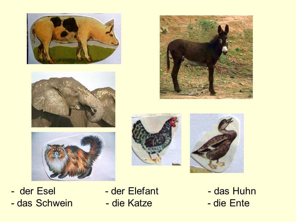 - der Esel - der Elefant - das Huhn - das Schwein - die Katze - die Ente