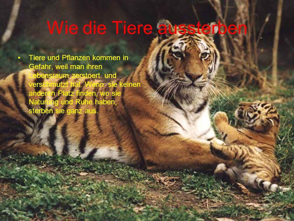 Wie die Tiere aussterben Tiere und Pflanzen kommen in Gefahr, weil man ihren Lebensraum zerstoert und verschmutzt hat. Wenn sie keinen anderen Platz f