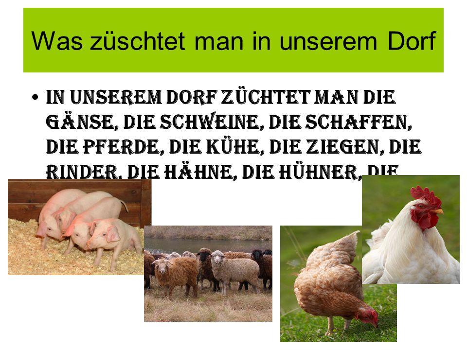 Was züschtet man in unserem Dorf In unserem Dorf züchtet man die Gänse, die SchwEInE, Die Schaffen, die Pferde, die KÜhe, die Ziegen, die Rinder, die HÄhne, die HÜhner, die Enten.