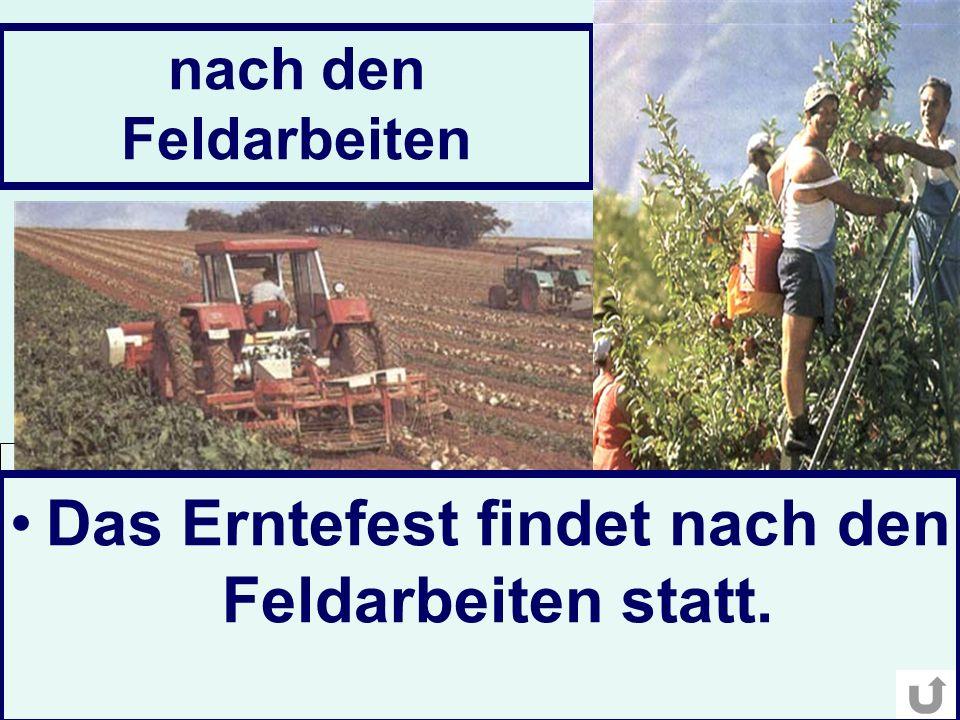 nach den Feldarbeiten Das Erntefest findet nach den Feldarbeiten statt.