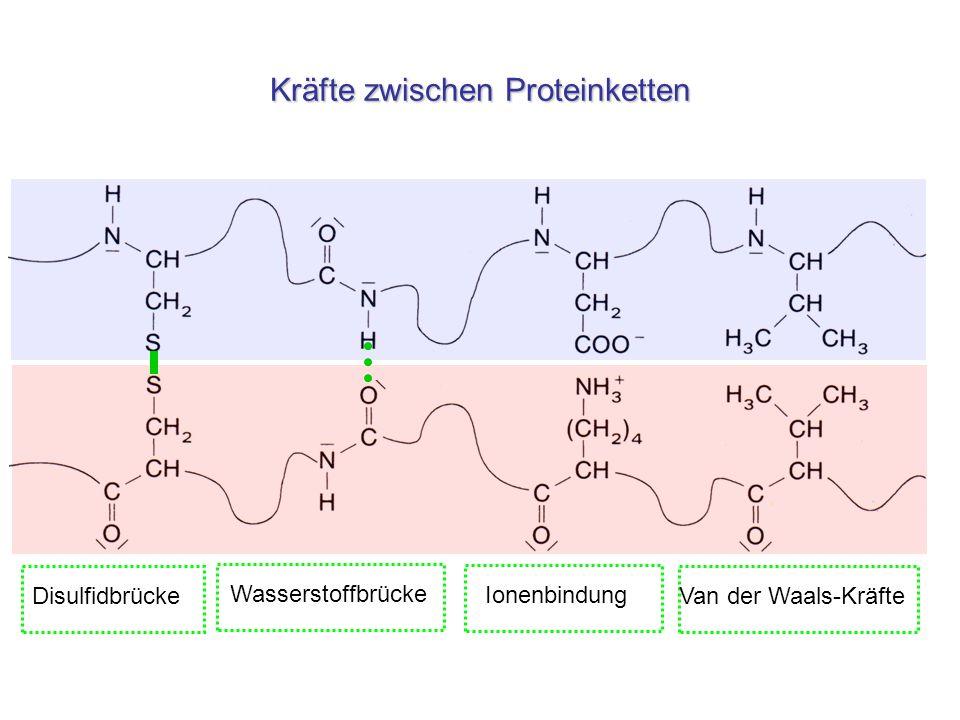 Wasserstoffbrücken zwischen DNA-Strängen