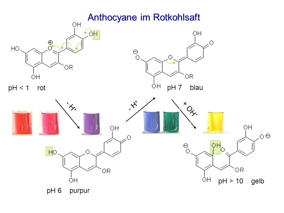 Anthocyane im Rotkohlsaft - H + + OH - pH 6 purpur pH 7 blau pH < 1 rot pH > 10 gelb