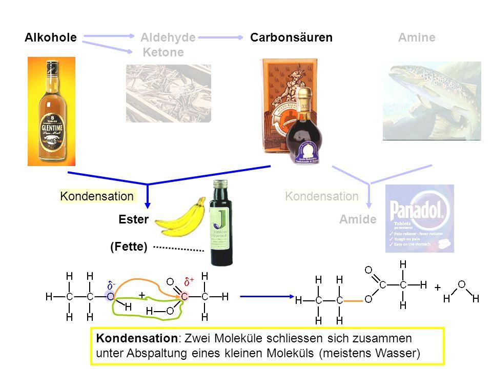 Alkohole Aldehyde Carbonsäuren Amine Ketone Ester (Fette) + - + + Kondensation: Zwei Moleküle schliessen sich zusammen unter Abspaltung eines kleinen Moleküls (meistens Wasser) Kondensation Amide Kondensation